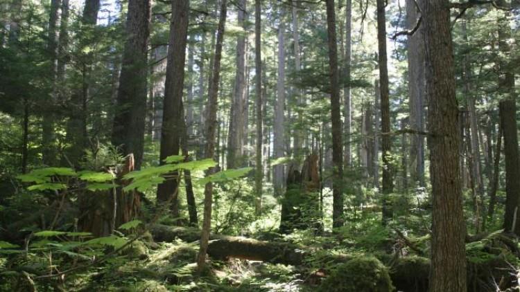 ฝึกเขียน IELTS Essay : หัวข้อ Natural resources