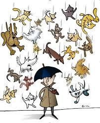 rainingcatsdogs
